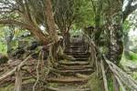 Thumbnail a rugged path, Parque das Quimeidas, Madeira, Portugal