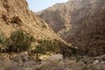 Thumbnail Palm grove and cliffs covered in debris in Wadi Shab, Sultanate of Oman, Middle East