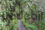 Thumbnail hiking trail along the levada, Caldeirao Verde, Madeira, Portugal