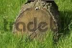 Thumbnail trunk