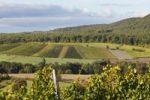 Thumbnail Vineyards near Oberschwarzach, Steigerwald, Lower Franconia, Franconia, Bavaria, Germany, Europe