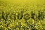 Thumbnail rape field