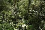 Thumbnail rainforest, Arenal region, Costa Rica