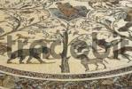 Thumbnail Mosaic with animals archaeological excavation of antique Roman city Volubilis Morocco