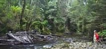 Thumbnail At wild Surprise River in Franklin Nationalpark Tasmania Australia