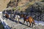 Thumbnail nicely decorated donkeys, Thira, Santorini, Greece