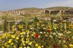 Thumbnail in spring the archaeological site is covered with colorful flowers, Delos, Greece