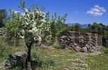 Thumbnail ancient village of the Nuraghe culture Serra e Orrios near Oliena Sardegna Italy
