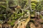 Thumbnail Bavarian Forest National Park Germany