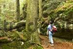 Thumbnail Bavarian Forest National Park Germany