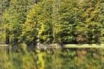 Thumbnail Rachelsee lake National Park Bavarian Forest Germany