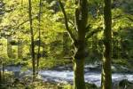 Thumbnail Ilz river Bavarian Forest Germany