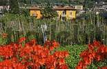 Thumbnail flowers in garden in Toscolano at Lake of Garda Italy
