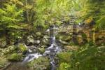 Thumbnail nature reserve Buchberger Leite near Freyung Bavarian Forest Germany