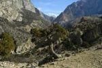 Thumbnail Mountain scenery with juniper tree Jhunum Nar-Phu Annapurna Region Nepal