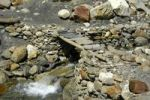 Thumbnail Simple bridge made of wood and flat rocks over a creek Nar-Phu Annapurna Region Nepal