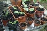 Thumbnail gardening
