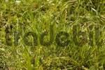 Thumbnail lawn