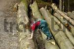 Thumbnail One three-year-old girl climbing on cut tree trunks