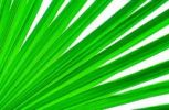 Thumbnail Palm leaves fan