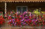 Thumbnail balcony with flowers on farmhouse in Ascholding Bavaria Germany