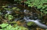 Thumbnail a stream in the nationalpark Bavaria forest Germany