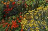 Thumbnail Blooming flowerbed in Inverewe Garden in Scotland Great Britain