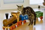 Thumbnail young domestic cat with toy train