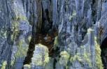 Thumbnail Lichens Usnea filipendula on a dead tree Torres del Paine national park Chile