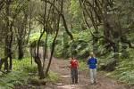 Thumbnail hikers in National park Garajonay La Gomera Canary Islands