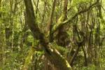 Thumbnail National park Garajonay La Gomera Canary Islands