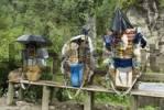 Thumbnail load of a Sherpa porter, Solukhumbu, Khumbu, Mount Everest Region, Nepal