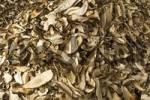 Thumbnail dried yellow boletus on a green Market