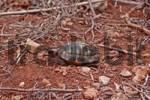 Thumbnail tortoise