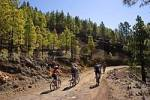 Thumbnail mountain bikes in pine forest near Vilaflor Tenerife Canary Islands Spain