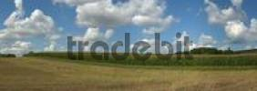 Thumbnail Cornfield with clouds, Friesenhausen, Hassberge, Lower Franconia, Bavaria, Germany