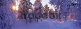 Thumbnail winter landscape, Lappland