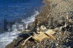 Thumbnail Driftwood at the beach