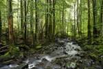Thumbnail Els stream, Rhoen, Franconia, Bavaria, Germany