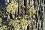 Thumbnail structures of wood Lake St Clair Nationalpark Tasmania Australia