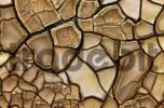 Thumbnail cracks in clay soil