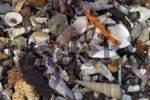 Thumbnail shells at Coles Bay Freycinet Nationalpark Tasmania Australia