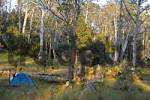 Thumbnail campsite near New Pelion Hut on Overland Track in Cradle Mountain Lake St Clair Nationalpark Tasmania Australia