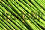 Thumbnail Green bamboo sticks