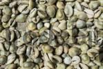 Thumbnail Cypraeidae shells, Matemo island, Quirimbas islands, Mozambique, Africa