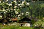 Thumbnail Springtime in the Simmental, Daerstetten, Switzerland