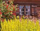 Thumbnail Germany Bavaria Upper Bavaria Linderhof old Farmhouse Wooden house Window with wooden Window shutter red Rosebush yellow Flowers Firewood
