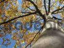 Thumbnail autumn tree with yellow leafs