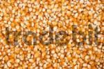 Thumbnail Dried maize grain
