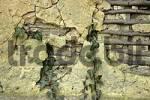 Thumbnail house wall ivy